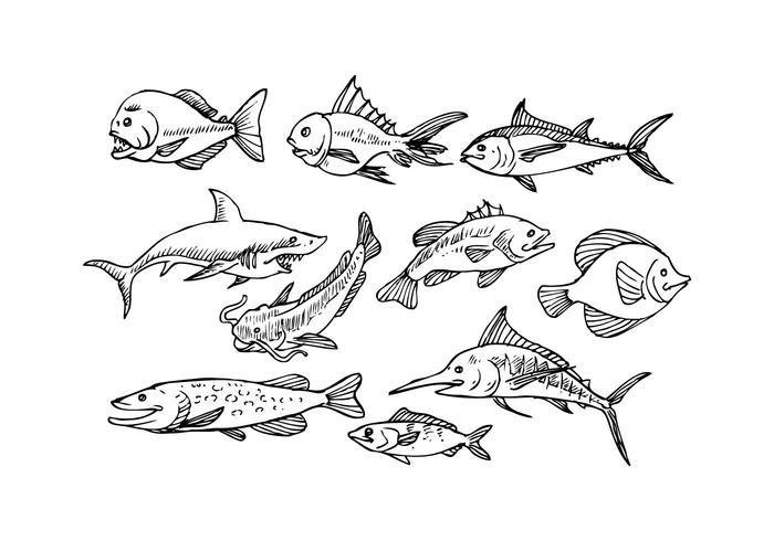 700x490 Free Fish Sketch Icon Vector