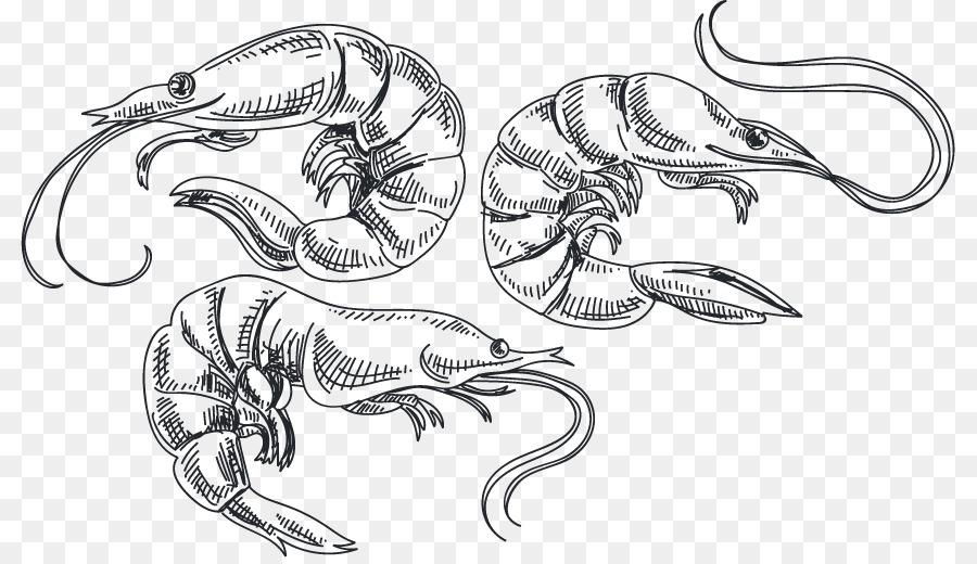 900x520 Caridea Shrimp Sketch