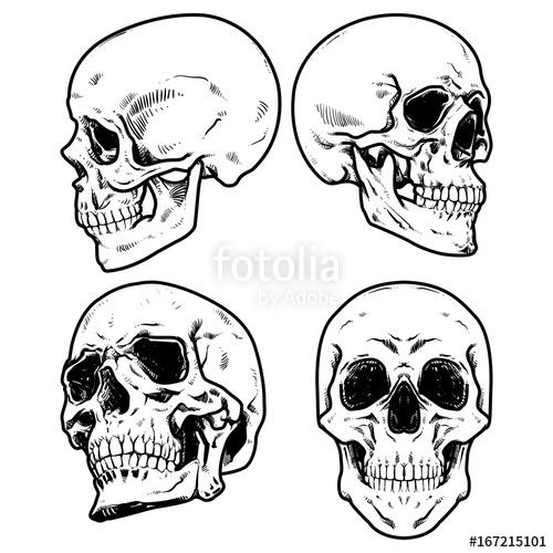 500x500 Skull Vector Illustration, Collection Of Hand Drawn Skulls, Hard