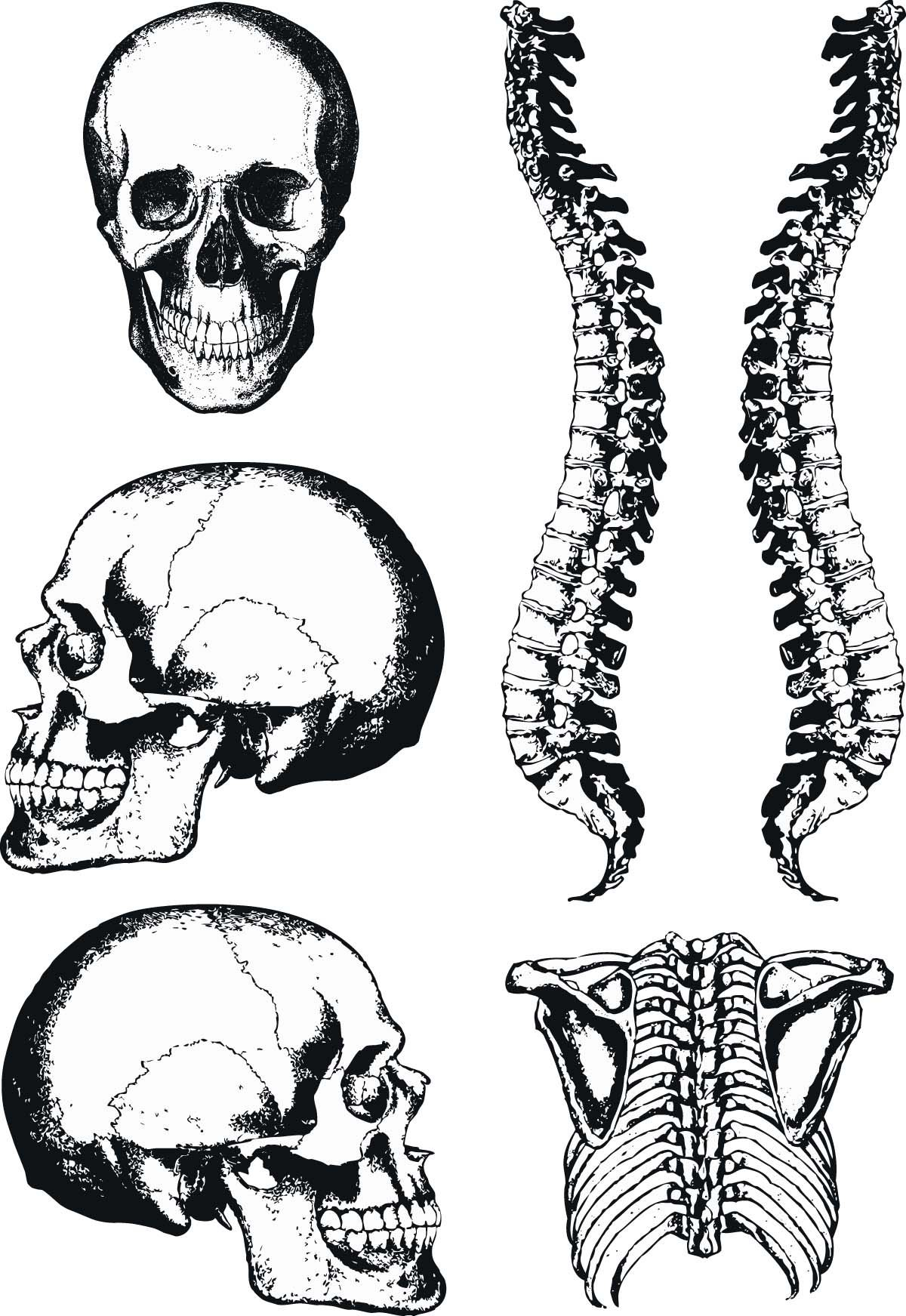 1200x1743 Human Anatomy Graphic Skull And Spine Vector Free Vectors,cards