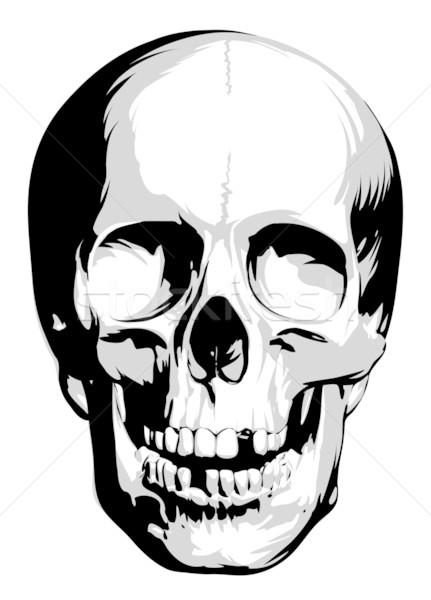 431x600 Vector Skull Vector Illustration Misha ( 139684) Stockfresh