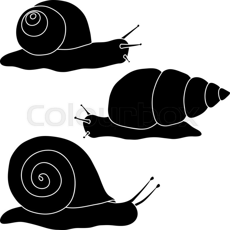 800x800 Set Of Black Silhouettes Of Snails. Vector Illustration. Stock