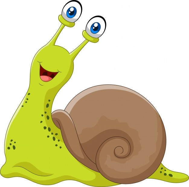 626x620 Snail Vectors, Photos And Psd Files Free Download