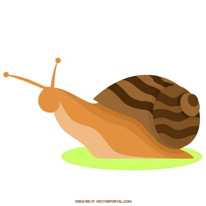 660x660 Snail Vector Image. Snails, Snails And More Snails With A Few