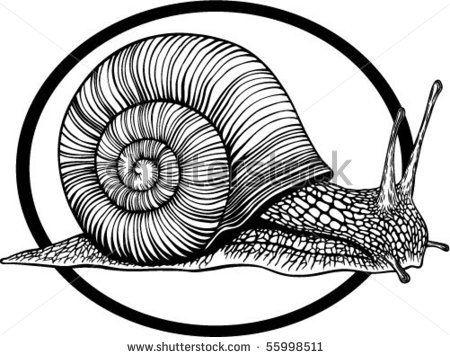 450x357 Cartoon Snail Vector Illustration