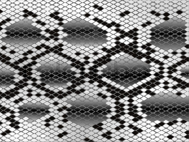 800x602 Snake Skin Pattern In Black And White Stock Vector Colourbox