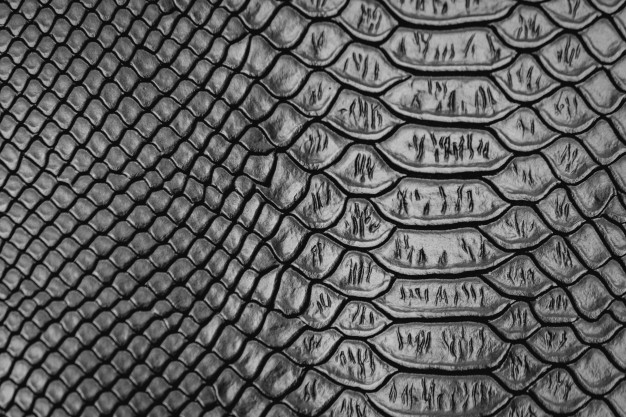 626x417 Snake Skin Vectors, Photos And Psd Files Free Download