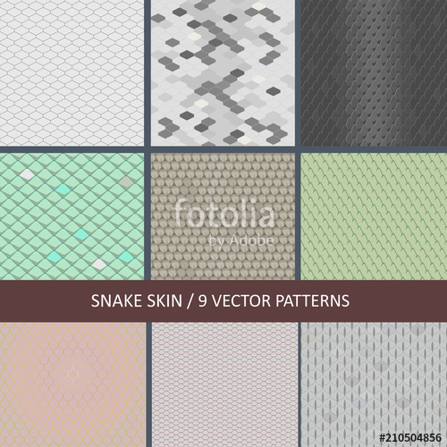 500x500 Set Of Seamless Snake Skin Textures Stock Image And Royalty Free