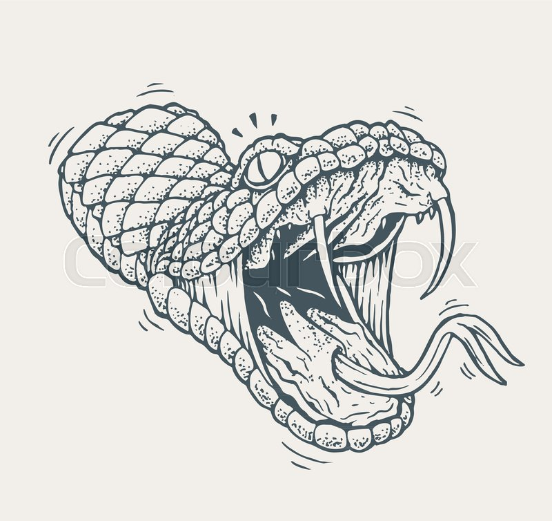800x754 Attacking Snake Vector Illustration. Old Tattoo Style Drawing