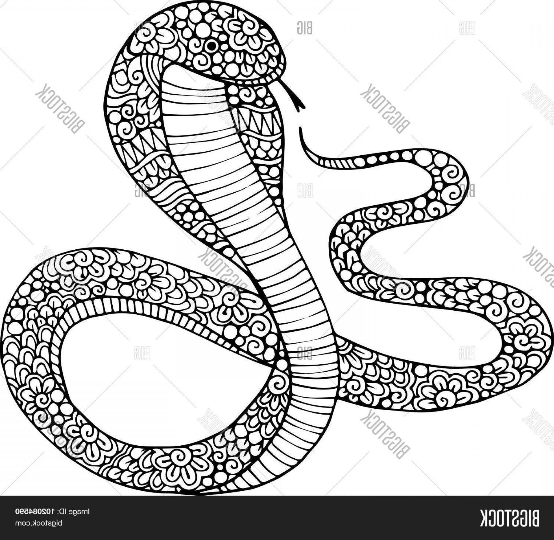 1800x1752 Large Snake Vector Art Arenawp