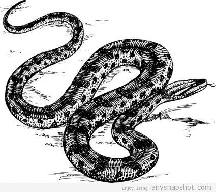 425x377 Long Snake Vector Free