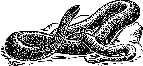 600x279 Snake Black And White Black Snake Clip Art