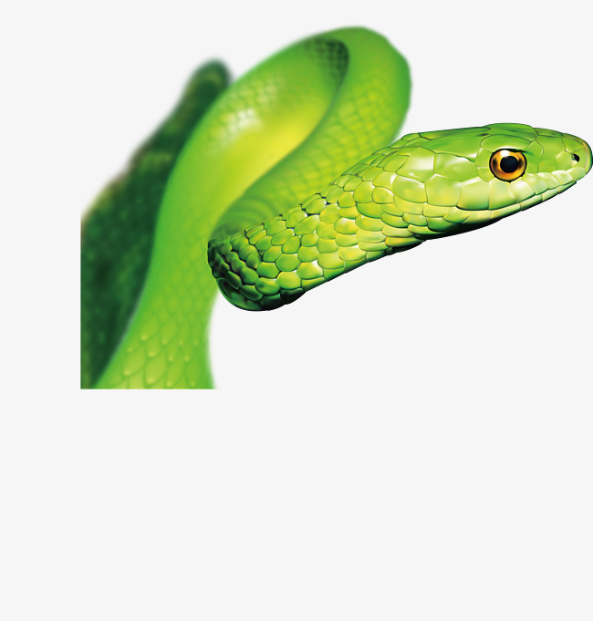 650x681 Vector Green Snake, Snake Clipart, Snake, Vector Png And Vector
