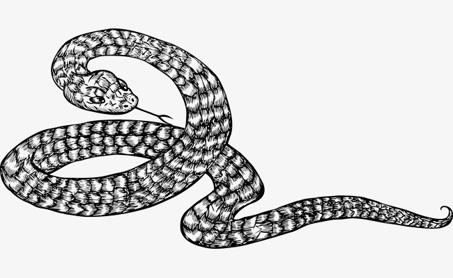 650x400 Coiled Snake Png Hd Transparent Coiled Snake Hd.png Images. Pluspng