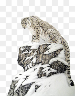 260x331 Snow Leopard Png Images Vectors And Psd Files Free Download On