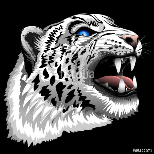 500x500 Snow Leopard Roar Stock Image And Royalty Free Vector Files On