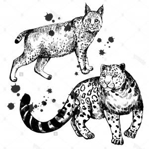 300x300 Stock Photo Hand Drawn Sketch Style Lynx And Snow Leopard Vector