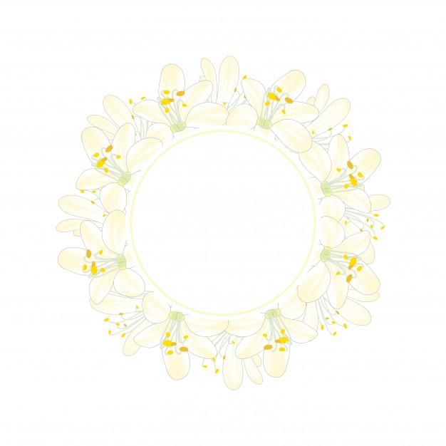 626x626 Snow White Agapanthus Banner Wreath Vector Premium Download