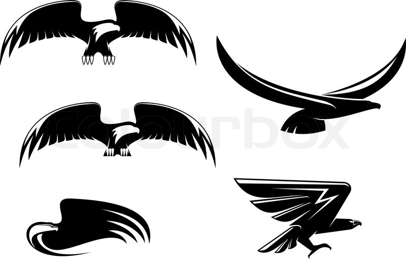 800x511 Heraldry Eagle Symbols And Tattoo Isolated On White Stock Vector