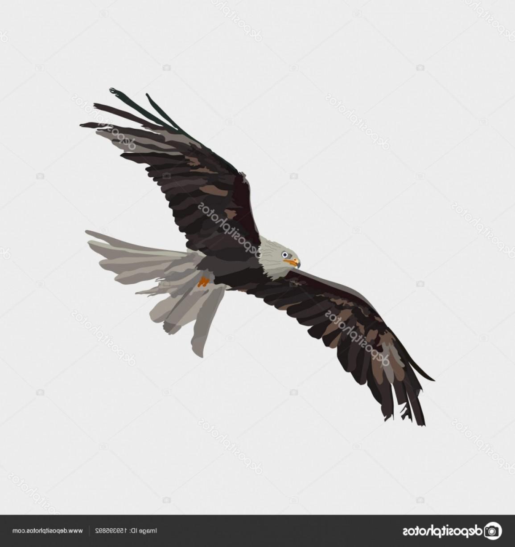 1155x1228 Kite Vector Eagles Sohadacouri