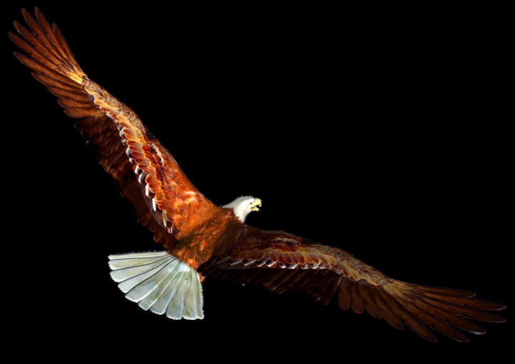 1024x724 Soaring Eagle Png Clipart