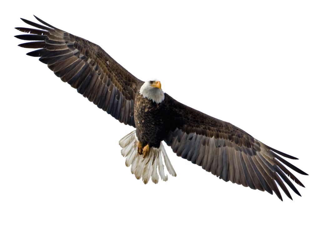 1024x720 Soaring Eagle Transparent Png
