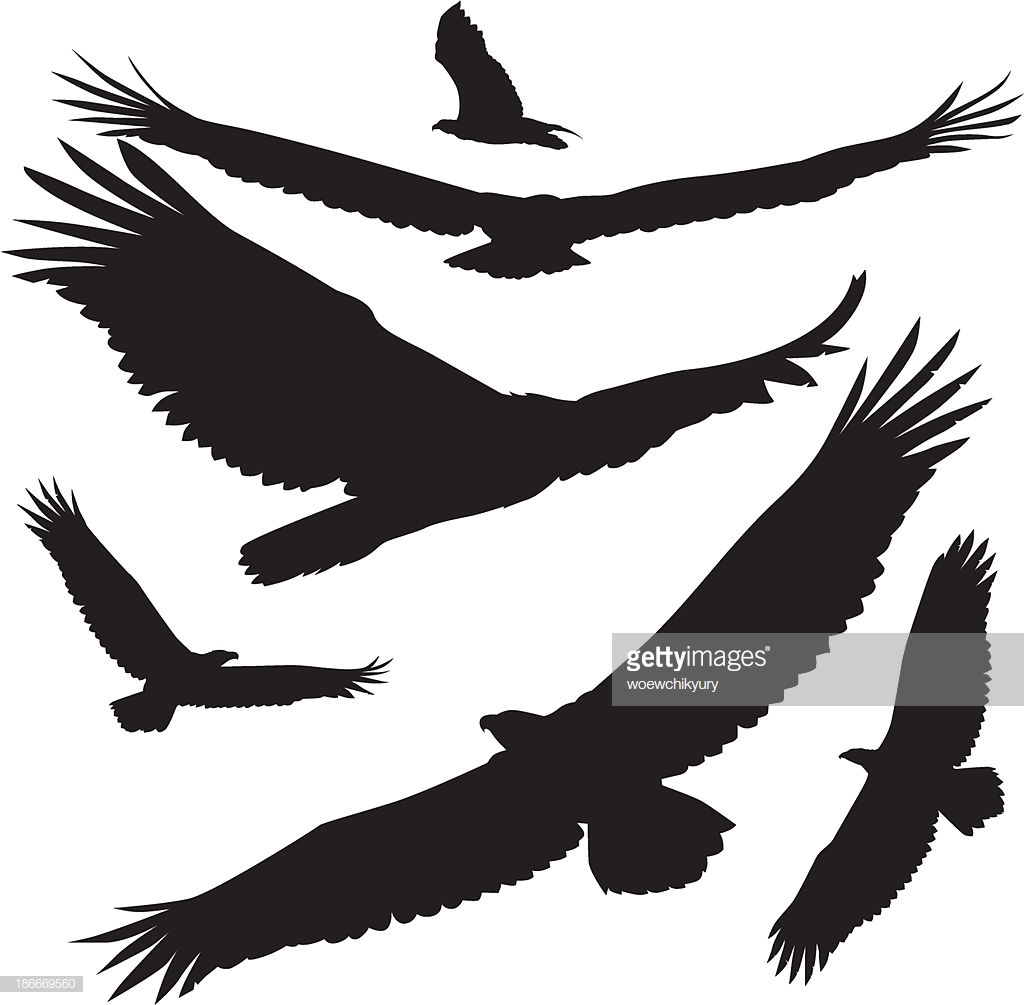 1024x1005 Collection Of Soaring Eagle Silhouette Download Them And Try To