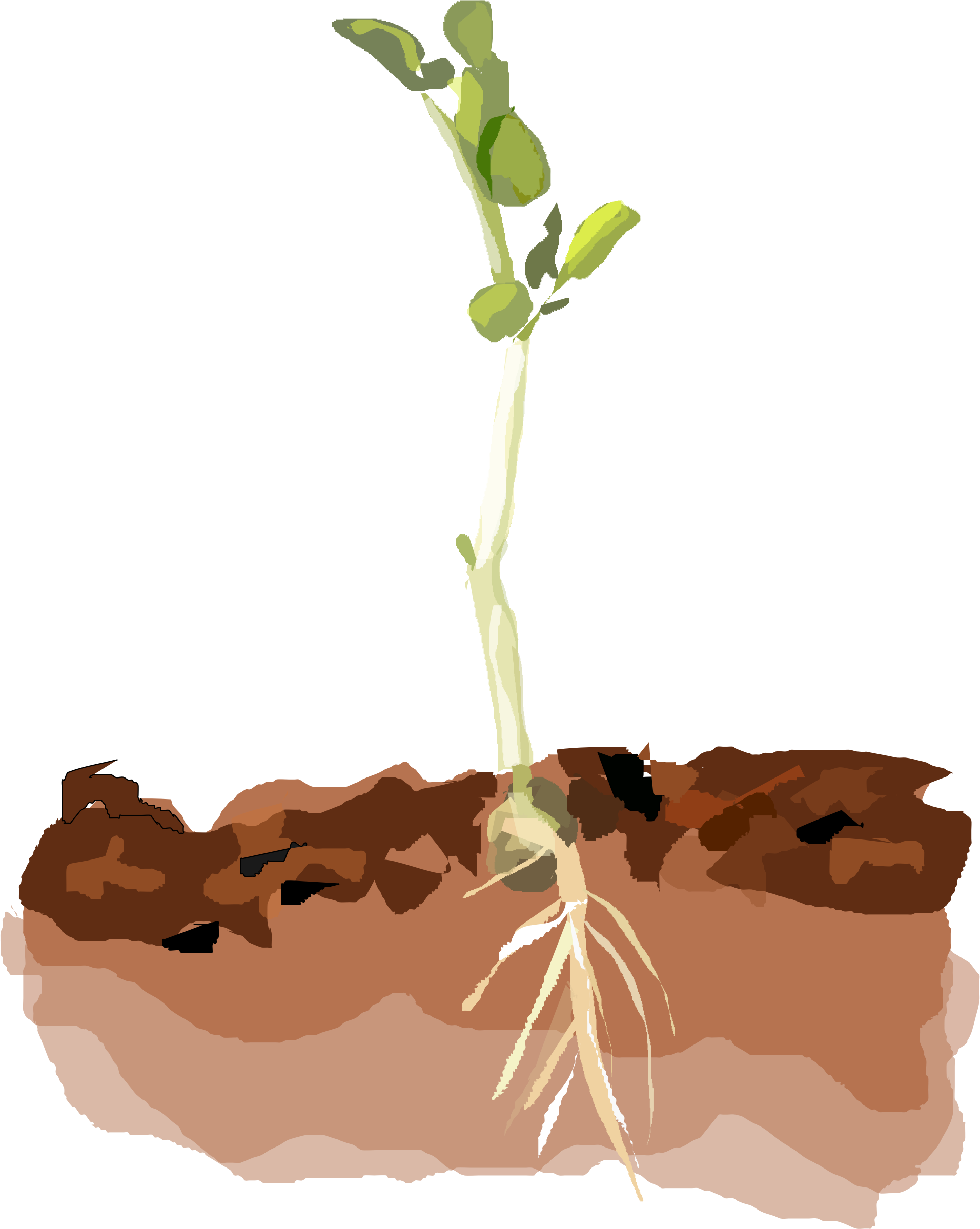 Soil Vector
