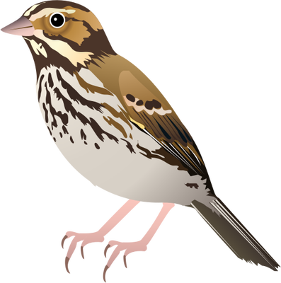 397x400 Collection Of Free Birds Vector Sparrow. Download On Ubisafe