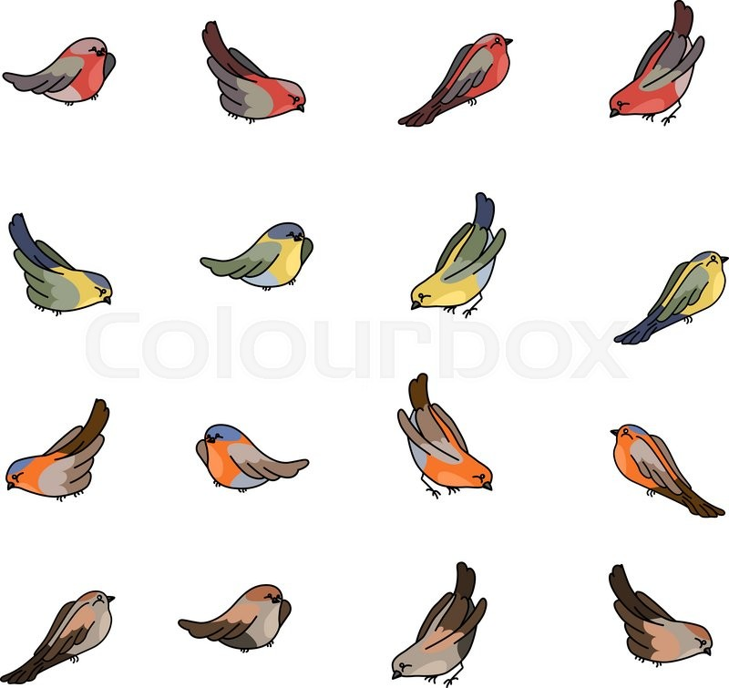 800x755 Set With Different Small Birds