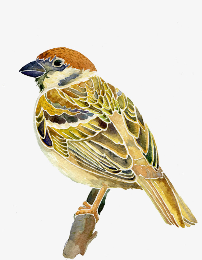 650x834 Sparrow, Vector, Watercolor Png And Vector For Free Download