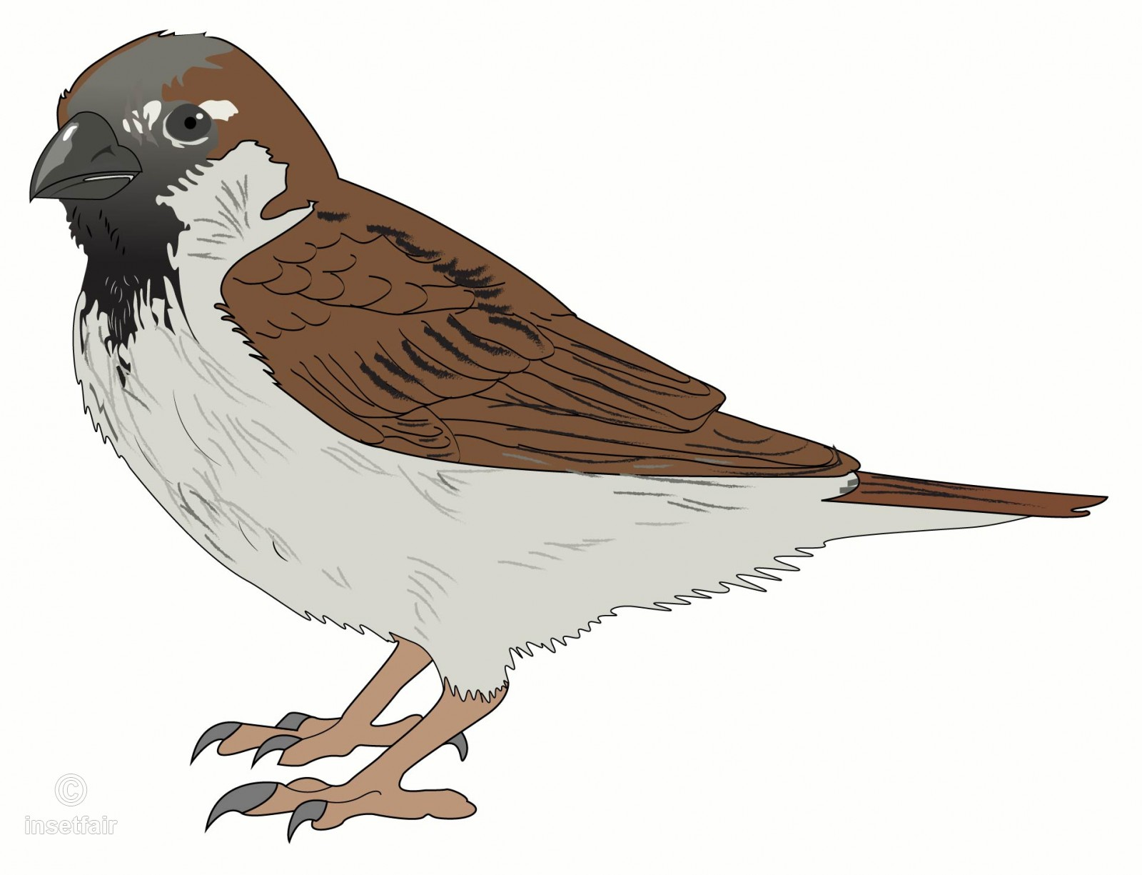 1600x1225 Sparrow Vector Art In Png For Free Download