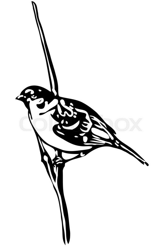 533x800 Black And White Vector Sketch Of A Little Bird On A Branch Sparrow