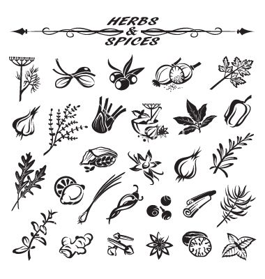 380x400 Herbs And Spices Vector Icons