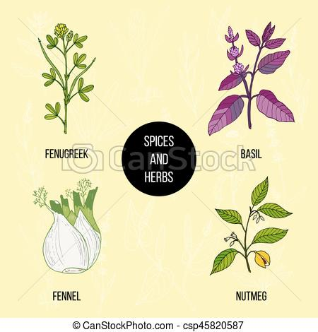 450x470 Hand Drawn Set Of Culinary Herbs And Spices. Vector... Vector