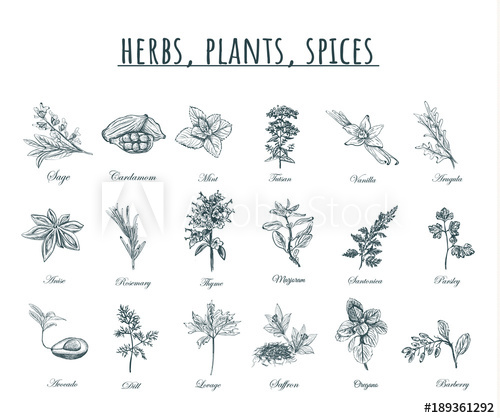 500x418 Herbs, Plants And Spices Vector Illustration.