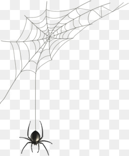 260x313 Spider Web Png Images Vectors And Psd Files Free Download On
