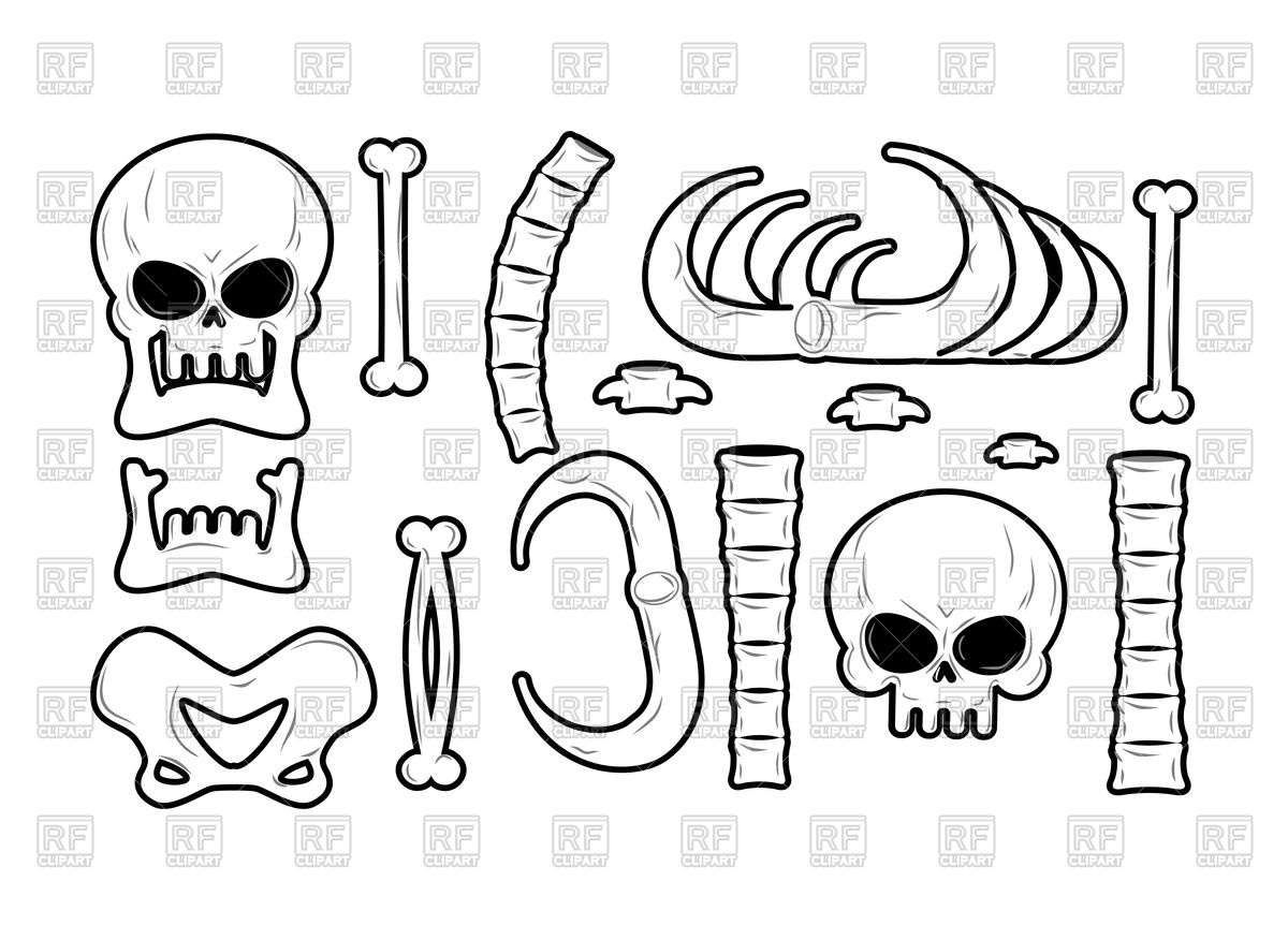1200x876 Bones Set. Anatomy Icons. Skull And Spine. Vector Image Vector