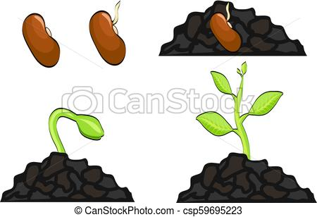 450x308 Plant Growth Stages From Seed To Sprout. Vector Illustration, Eps 10.