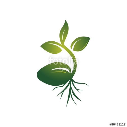 500x500 Realistic Sprout Seed Grow Vector Illustration Stock Image And