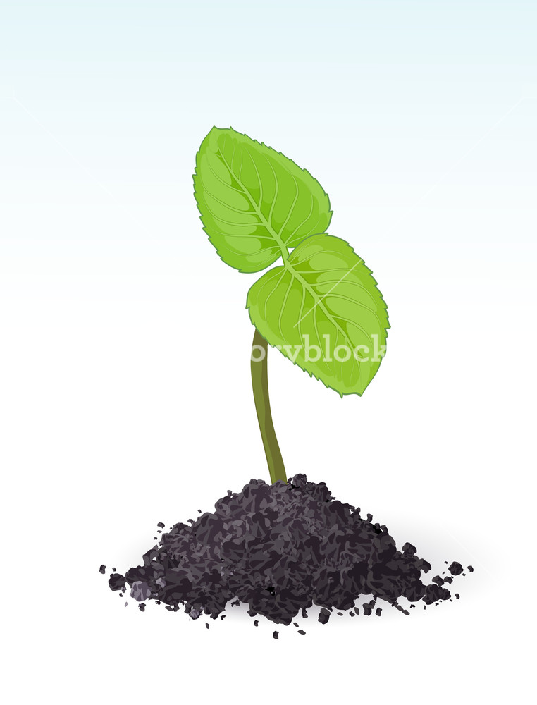 762x1000 Spring Sprout. Vector. Royalty Free Stock Image