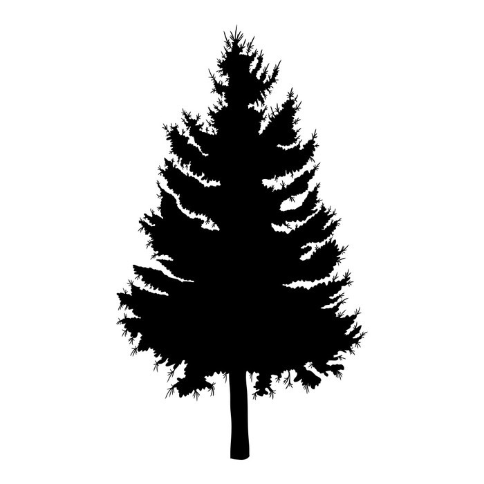 700x700 Hand Drawn Fir Tree Vector Illustration. Silhouette Of Black Pine