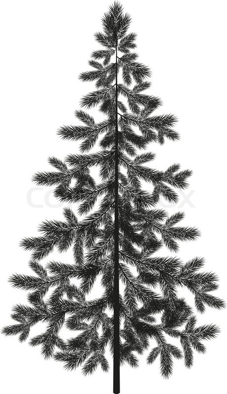 461x800 Christmas Spruce Fir Tree Black Silhouette Isolated On White