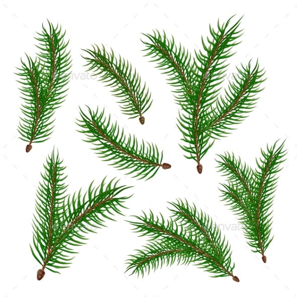 590x590 Vector Realistic Spruce Fir Tree Branches Set By Iwhitewings