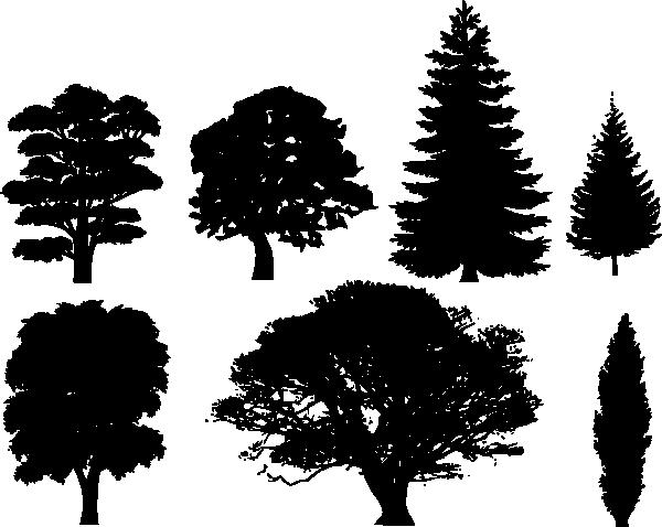 600x478 Drawn Fir Tree Vector