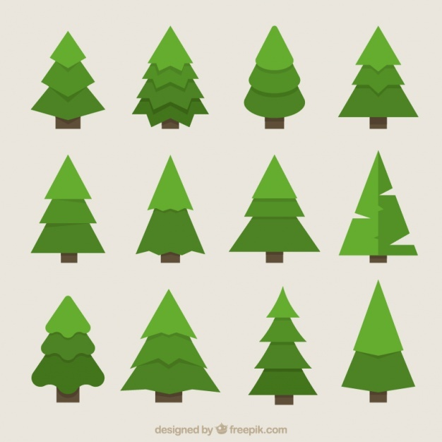 626x626 Fir Tree Vectors, Photos And Psd Files Free Download