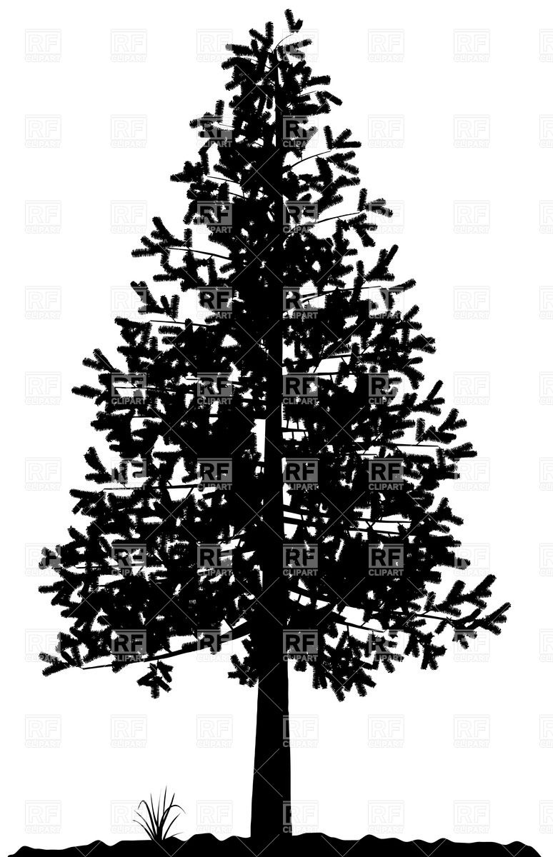 774x1200 Fir Tree Silhouette Vector Image Vector Artwork Of Silhouettes