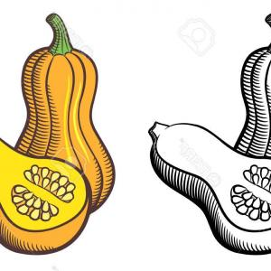 300x300 Photostock Vector Illustration Of Butternut Squash Outline And
