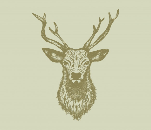 626x540 Deer Head Vectors, Photos And Psd Files Free Download