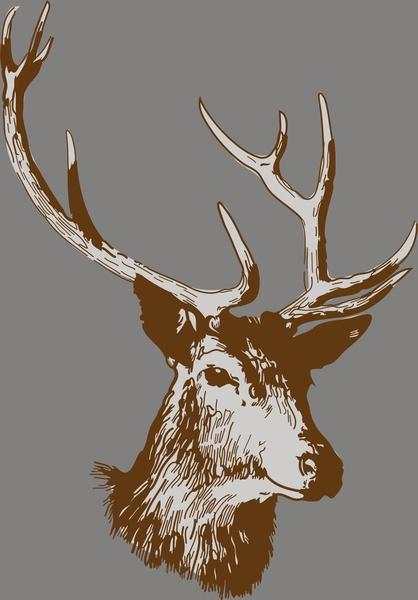 418x600 Deer Head Vector Free Vector In Encapsulated Postscript Eps ( .eps